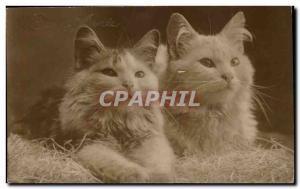 Fancy Postcard Old cats
