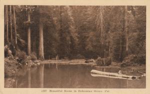 BOHEMIAN GROVE , California, 1910-20s; Beautiful Scene