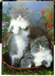 Postcard Cat Kittens basket - unposted