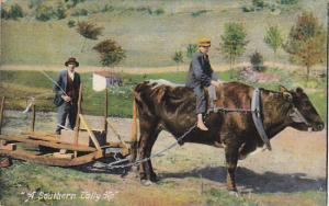Ox Cart A Southern Tally Ho 1908