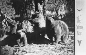 Bear Black Bears, Real Photo Unused