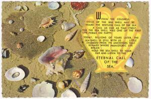 Colorful Shells - Eternal Call of the Sea