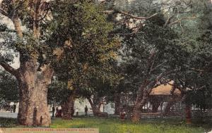 Santa Ana California~Orange County Park~Shelter House in Trees~1908 Postcard