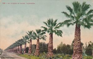 An Avenue Of Palms California