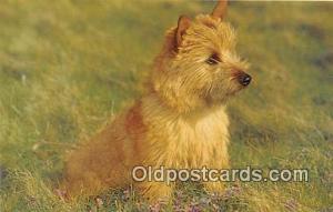 Norwich Terrier Salmon Watercolour Postcard Post Card Salmon Watercolour Norw...
