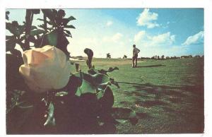 Magnolia Course, Golf Club, Disneyworld,   40-60s
