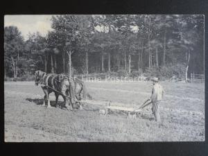Essex Country Life EPPING HOME FARM - PLOUGHING THE FIELD c1907 - Old Postcard