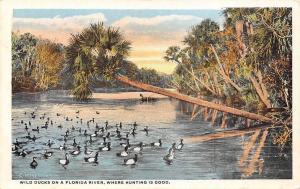 Uruguay Wild Ducks on a Florida River, Where Hunting is Good, Ducks, Birds