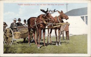 Moose Pulling Cart Wagon Typical Canadian Scene Canada Unused Postcard E36