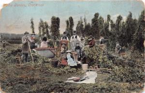 CRANBROOK KENT UK HOP GARDEN~HOLMES PUBLISHED POSTCARD 1907 *DAMAGED*