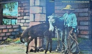 Vintage Postcard Amigos Y Companeros Mule Mexico