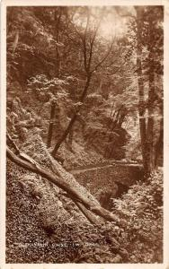 Shanklin Chine Isle of Wight River Forest Postcard