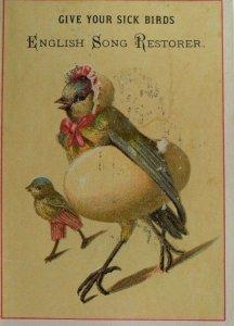 1870's Anthropomorphic Bird Disease English Song Restorer Trade Card P55