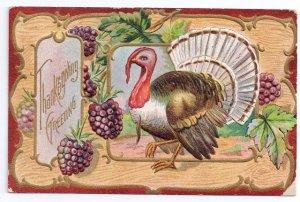 Jaeger Vintage Thanksgiving Postcard Embossed Gilt Outlines Turkey Blackberries