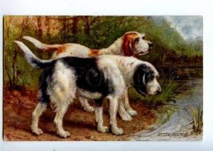 156520 HUNT Dogs OTTER HOUND by DRUMMOND Vintage TUCK PC