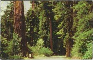 Vintage Union 76 postcard, Redwood Empire, San Francisco, California