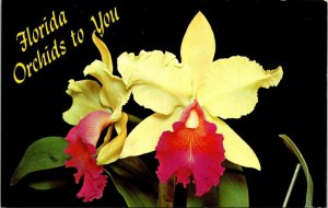 Postcard Florida Orchids To You Yellow Flowers Unposted Chrome 1518