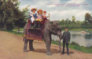 Elephants Children Riding Indian Elephant Gunda New York Zoological Park
