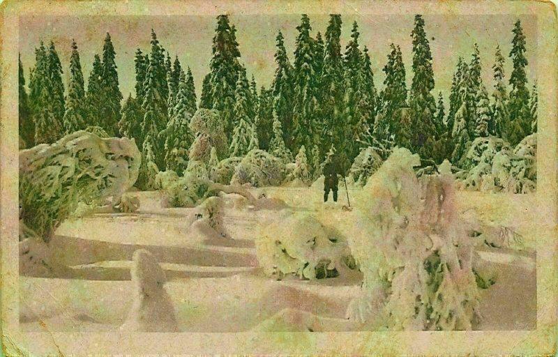 Norway Forest Winter Skier Postcard