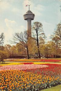 Holland / Rotterdam Euromast observation tower, tulips, flower field