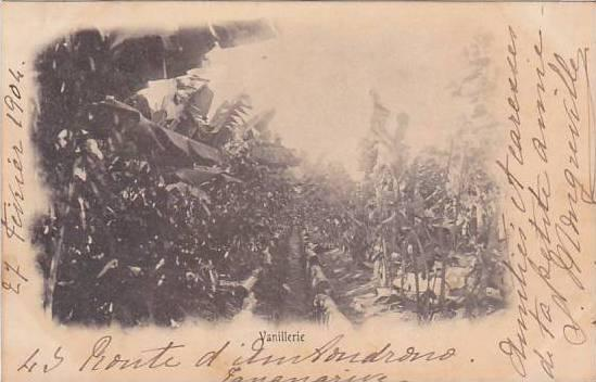 Madagascar Vanillerie Plantation 1904