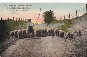 Herding Lambs To Pasture Is The Schoolboy's Delight 1916