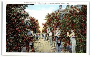 Mid-1900s Cherry Picking Time, Grand Traverse Region, Michigan Postcard