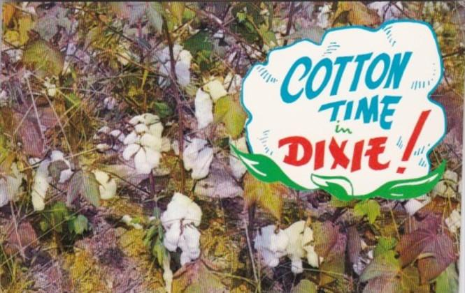 Cotton Boll's Cotton Time In Dixie
