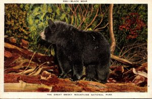 Tennessee Great Smoky Mountains Typical Black Bear
