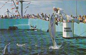 Feeding Time Marine Studios Saint Augustine Florida