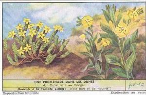 Liebig Vintage Trade Card S1622 Walk In The Sand Dunes No 4 Orpin acre-Onagre...