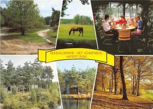 BG5370 bungalowpark het vennenbos hapert n br horse   netherlands