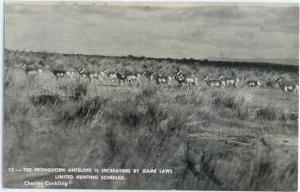 RPPC The Pronghorn Antelope is Increasing by Game Laws, Kodak Paper RP