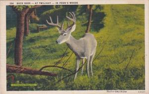 Pennsylvania Buck Deer At Twilight In Penn's Woods 1942