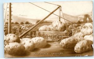 A Potato Harvest Loading Giant Potatoes on Wagon North American Postcard co A71