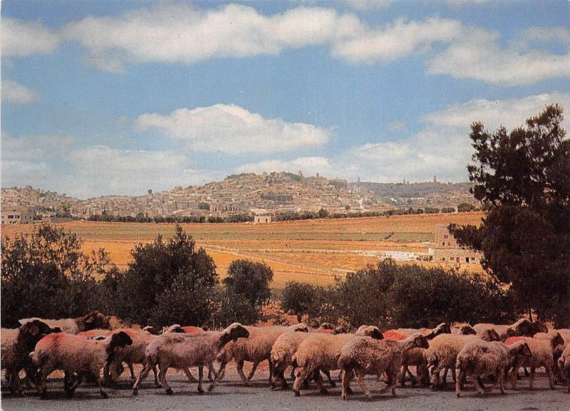 B52572 Bethlehem The Sheperd`s Field   israel