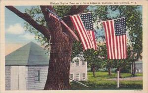 New York Geneva Historic Scythe Tree On A Farm Between Waterloo And Geneva
