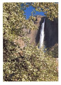Yosemite National Park, California, USA Postcard, Apple Orchard and Falls X26