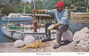 Fisherman With Bermuda Lobster