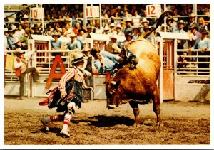 Canada Alberta Calgary Exhibition and Stampede Brahma Bull Riding and Rodeo C...