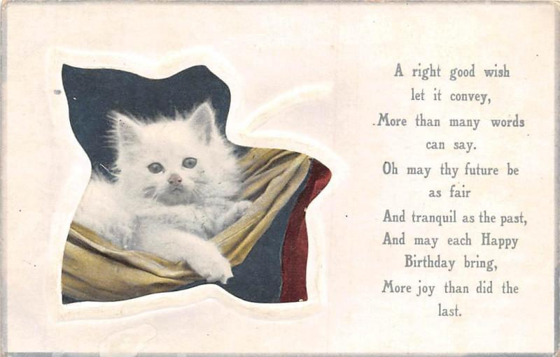 Right Good Wish, Happy Birthday, Joy, White Domestic Kitten Cat 1910