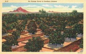 Orange Grove in Southern Arizona, AZ, 1942 Linen Vintage Postcard g3561