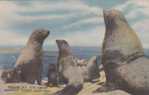 Colorado Denver Steller Sea Lion Group Colorado Museum Of Natural History Cur...