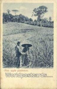 Malaya, Malaysia Pine Apple Plantation Pine Apple Plantation