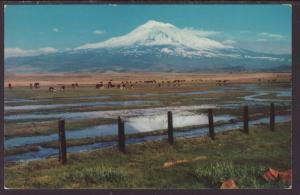 Mt Shasta,CA Postcard BIN