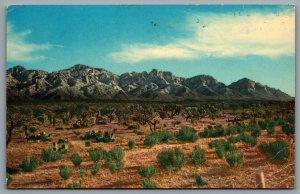 Postcard Santa Rosa NM c1950s Club Cafe & Curios Route 66 Desert View Defunct