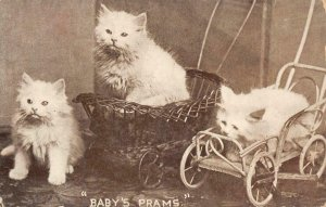 BABY PRAMS Cats Kittens Strollers Baby Carriages c1910s Vintage Postcard