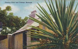 Century Plant and Cottage, Bermuda, 40-60s