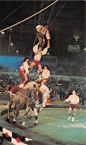 Ringling Brothers Varnum & Bailey Circus Post Cards Bareback Bravado The Grea...