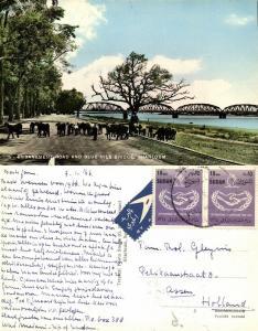sudan, KHARTOUM, Embankment Road and Blue Nile Bridge (1966) RPPC
